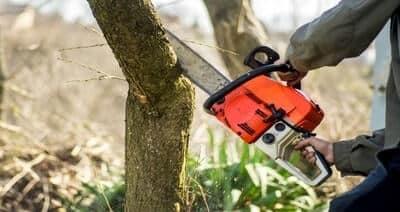 Best Lightweight Chainsaw